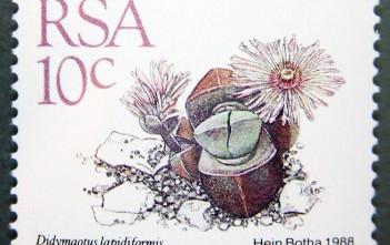 Didymaotus lapidiformis_South Africa_1988