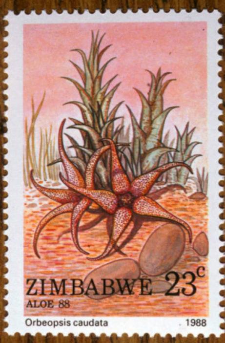 Orbea caudata-Zimbabwe-1988