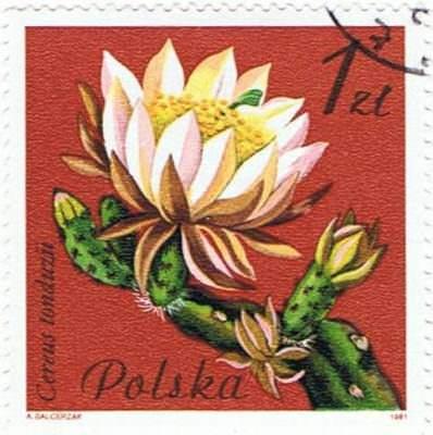 Cereus tonduzii-Poland-1981