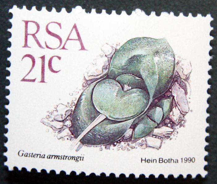 Gasteria nitida var. armstrongii-South Africa-1988