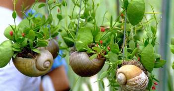 Snail Shell Miniature Gardens