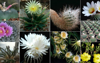 10 Of The Most Unique Cacti