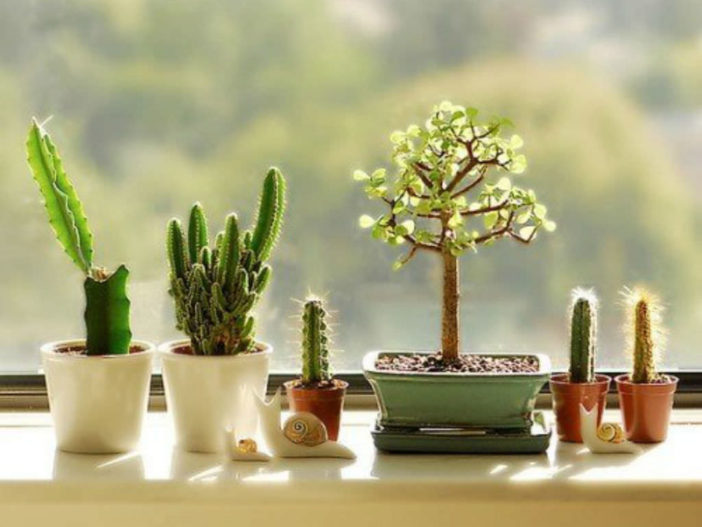 Cacti And Succulents Inside Your Home