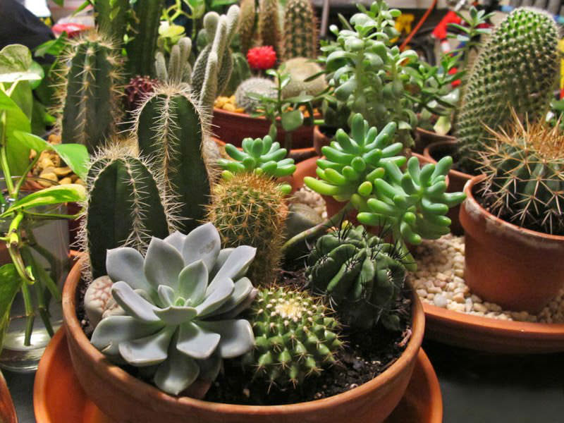 how to plant a cactus and succulent garden video  world of, Natural flower