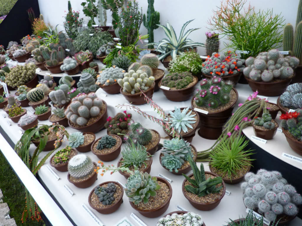 Introduction To Cacti And Succulents World Of Succulents