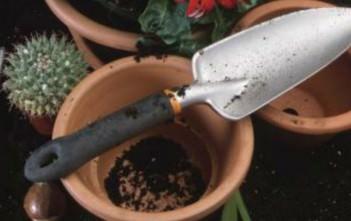 How to Pot Cactus