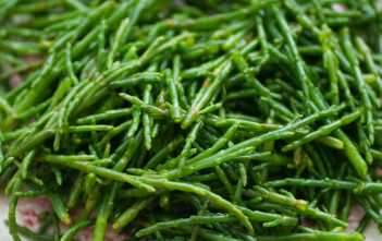 Salicornia europaea (Common Glasswort)