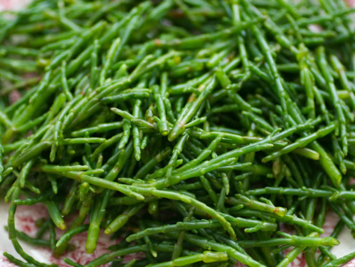 Sea Asparagus: A Brilliant Little Green Miracle