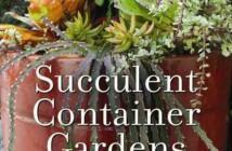Succulent Container Gardens