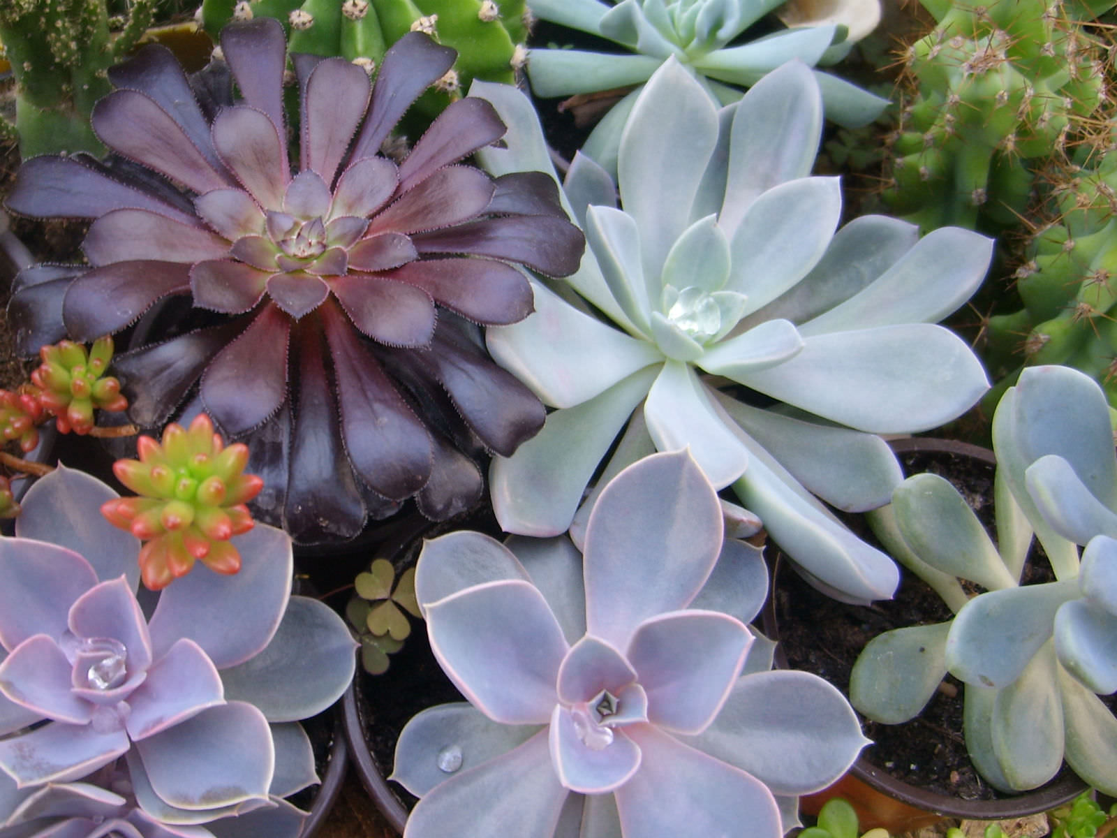 Cactus and succulent care for beginners world of succulents - Cool succulent plants ...