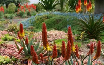 Attila's Garden