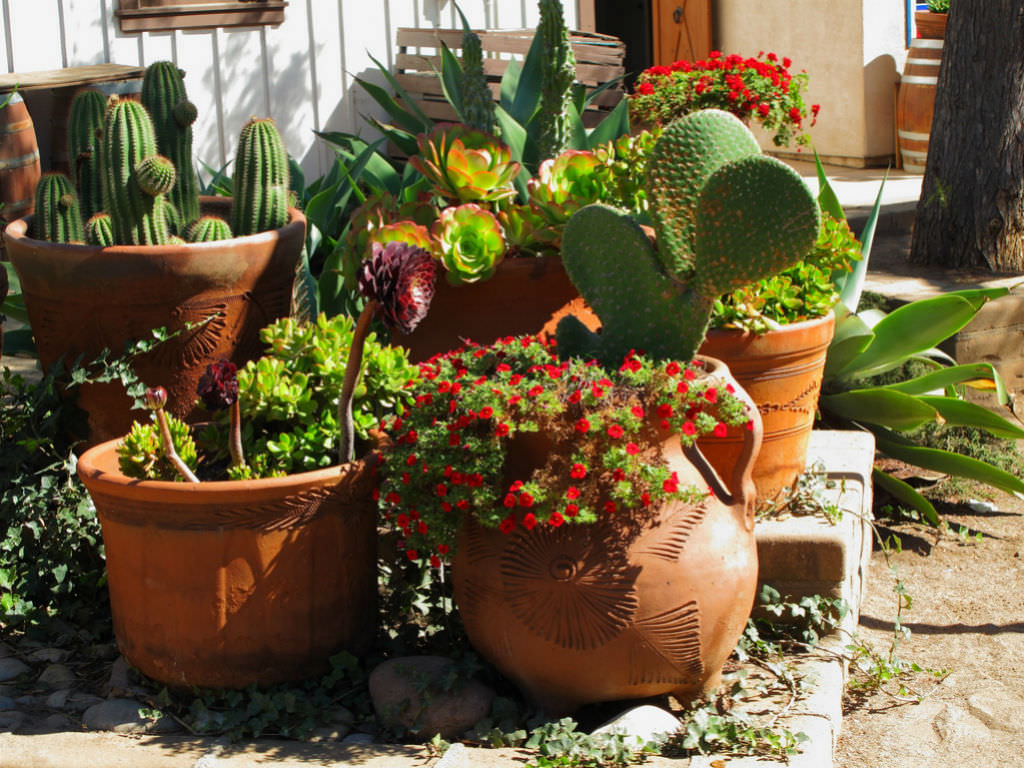 Try Cacti And Succulents For Easy Care
