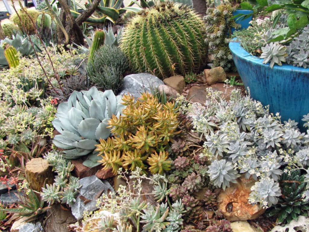 Cacti And Succulents For Beginners Living In Climatically