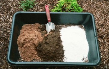 Homemade Potting Soil for Succulent Plants