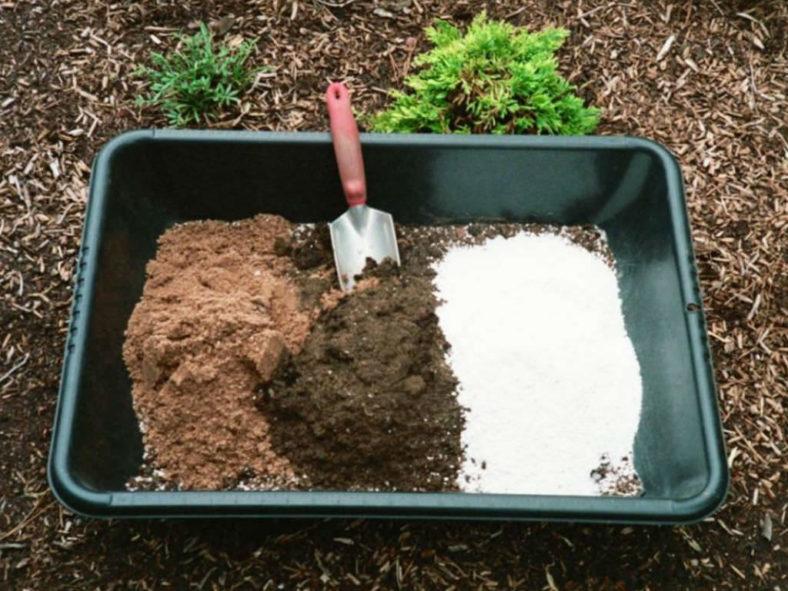 Homemade Potting Soil for Succulent Plants