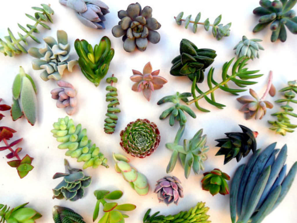 3 Ways To Propagate Succulents World Of Succulents