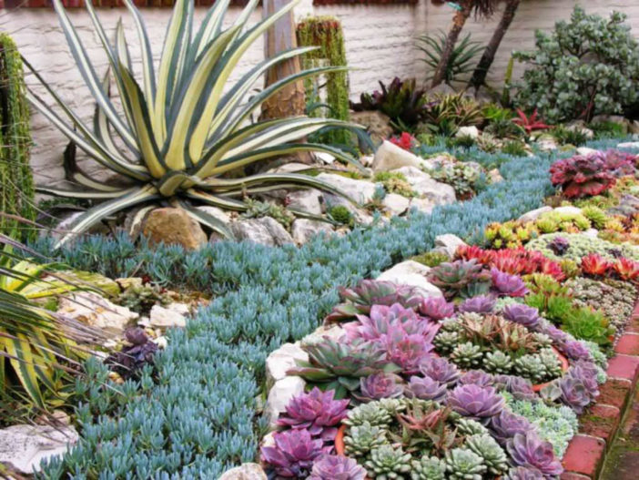 Succulents - Ideal Plants for Summer