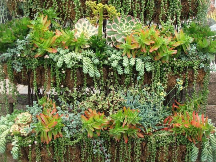 Summer Succulent Care