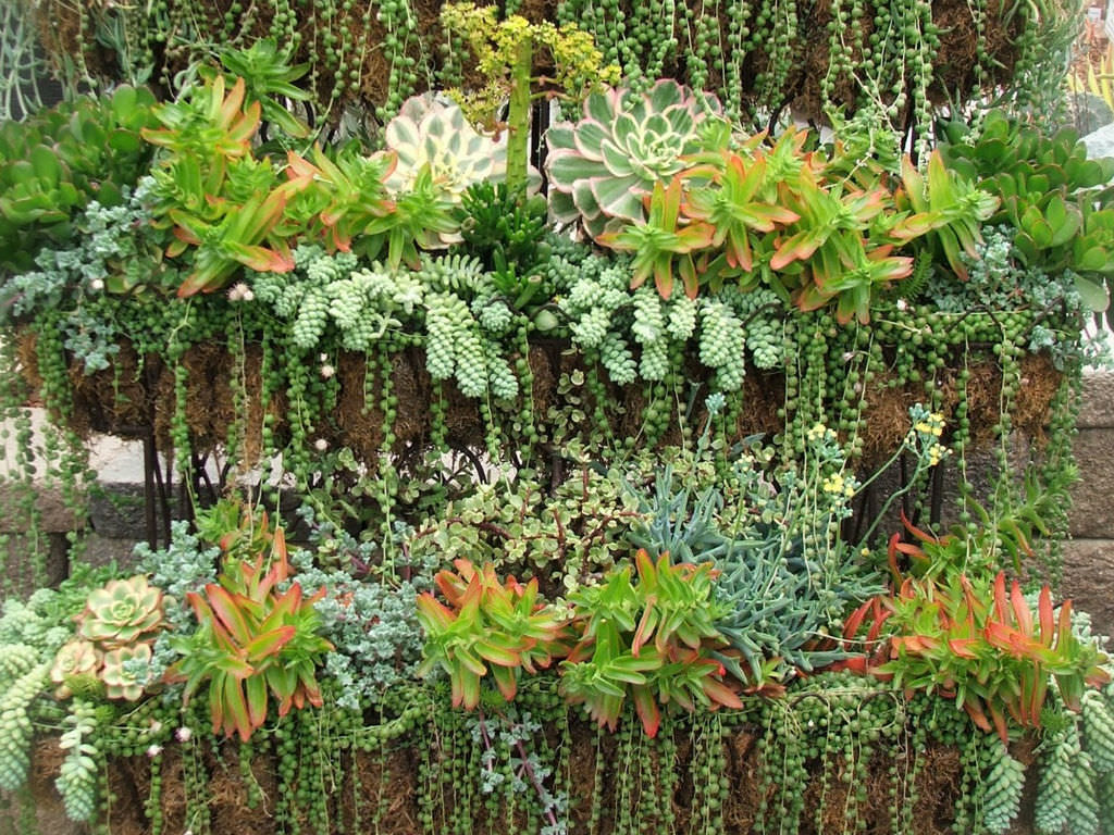 Plants for a north facing garden -  For Container North Garden Facing Plants Of Summer Succulents Care World Succulent