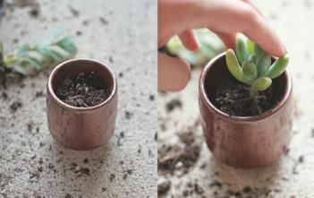 Repot Succulents