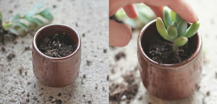 How To Repot Succulents | World Of Succulents