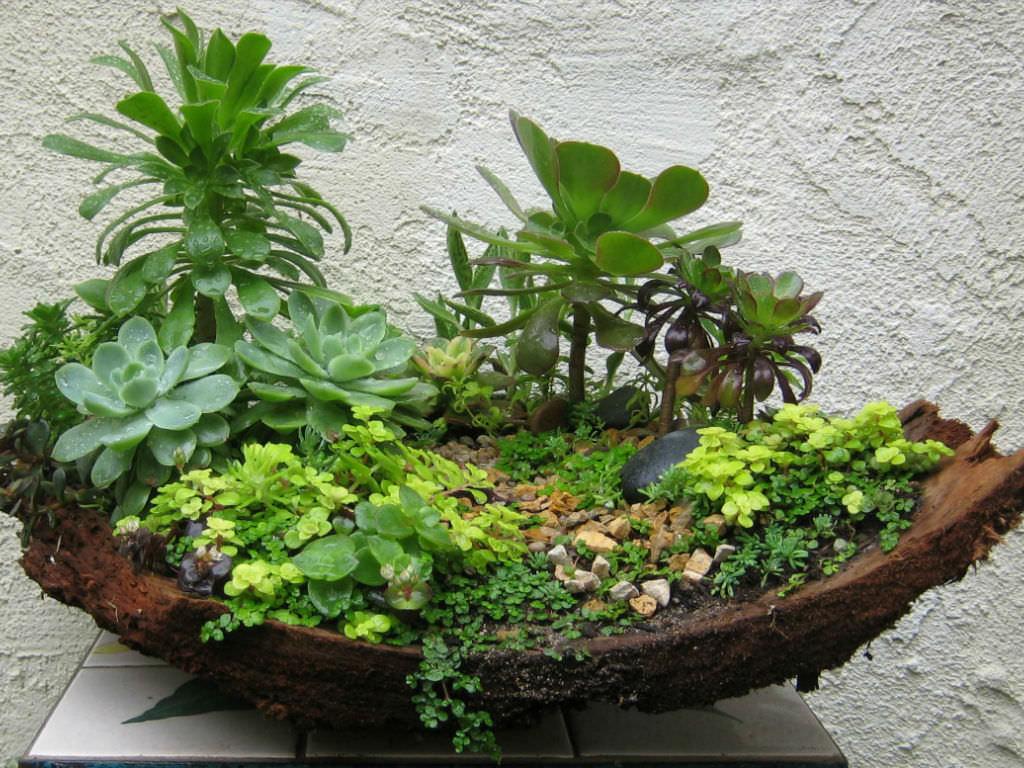 How To Repot An Arrangement Of Succulents World Of Succulents