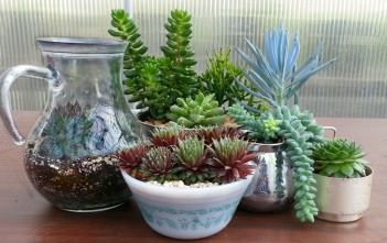 Identify Your Succulent Plant