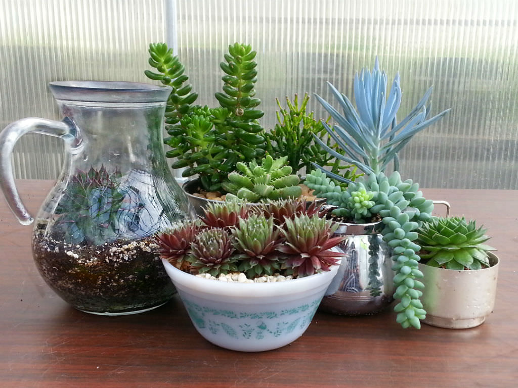 How To Identify Your Succulent Plant