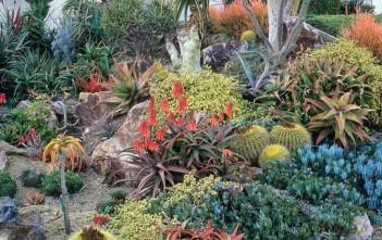 California Drought Tolerant Succulent Garden