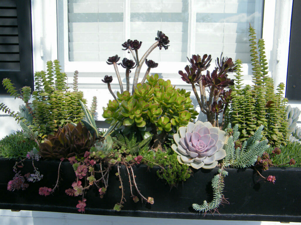 World of succulents for Bac a plante exterieur