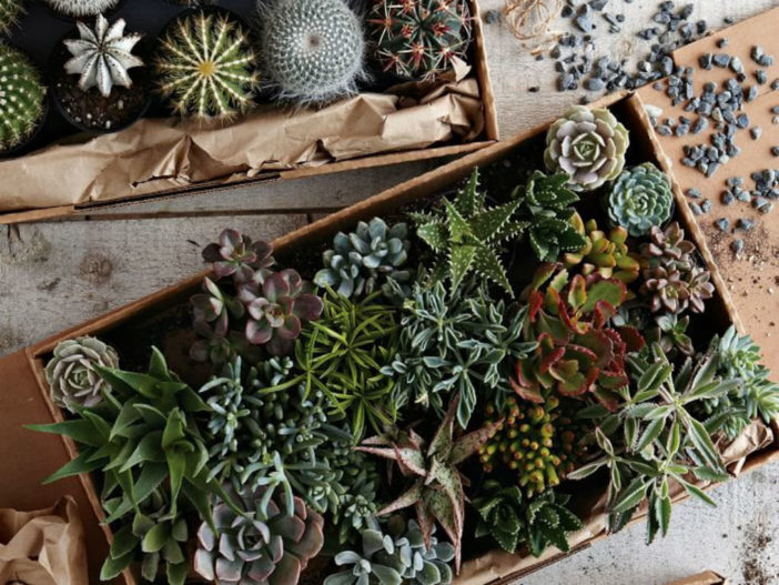 Moving Your Succulent Collection