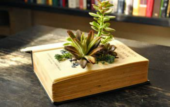 Book Planters for Succulents