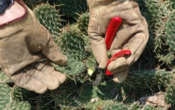 How and When to Prune a Cactus