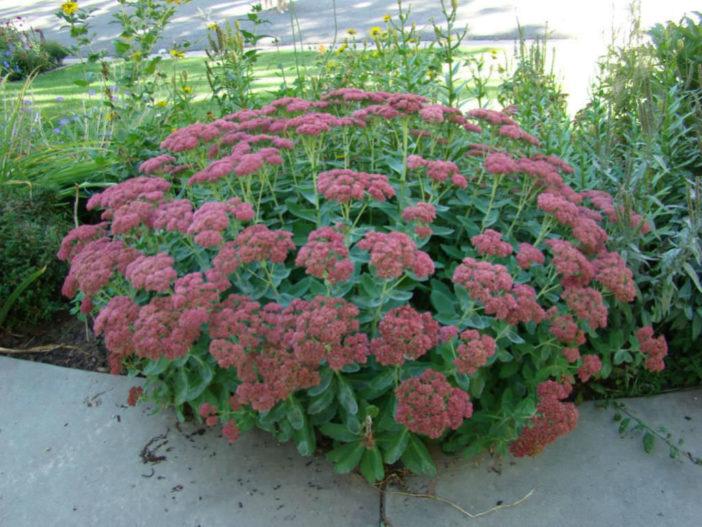 Photo via gardenweb.com