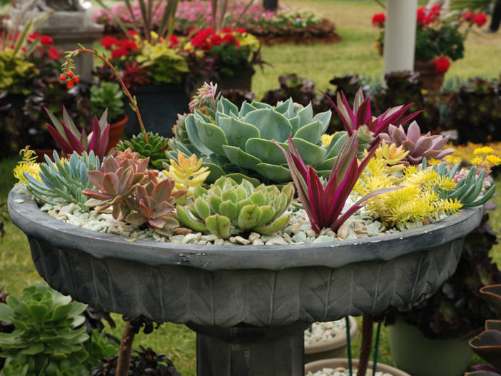 Potted Succulent Gardens World Of Succulents
