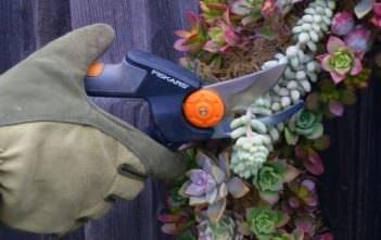 Prune Succulents