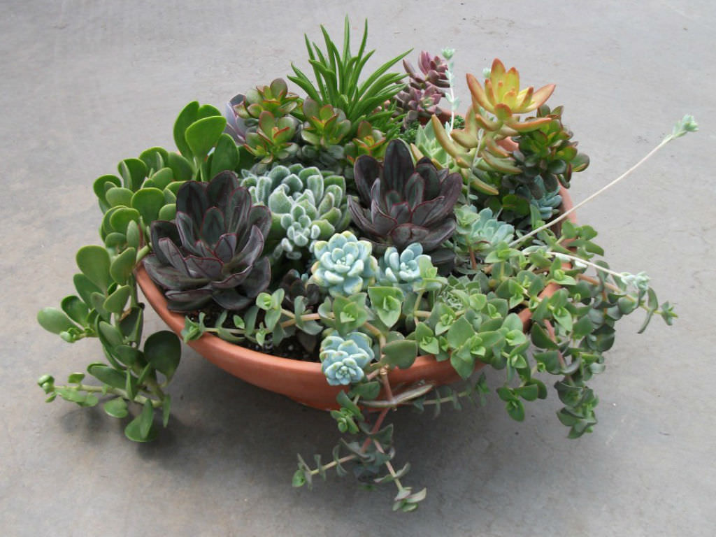 Succulents the perfect plants for forgetful gardeners world of succulents - Plants that dont need soil natures wonders ...