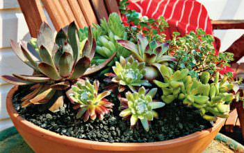 Succulent Gardening Tips and Tricks