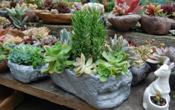 Growing Succulents - Succulents in Containers
