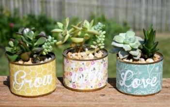 Succulents in a Pot Without Drainage Holes