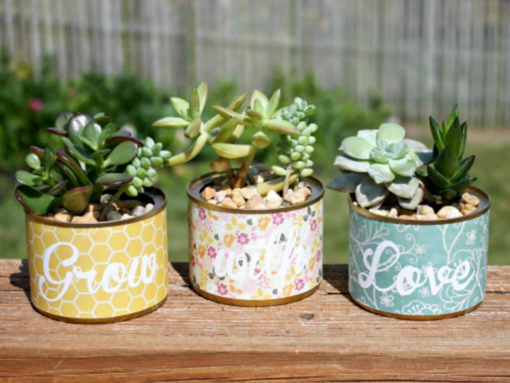 How To Grow Succulents In A Pot Without Drainage Holes