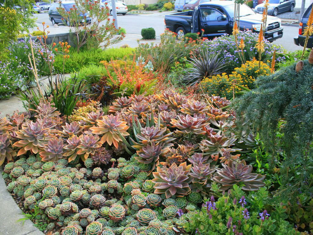 Tips For Growing Succulents Outdoors World Of Succulents