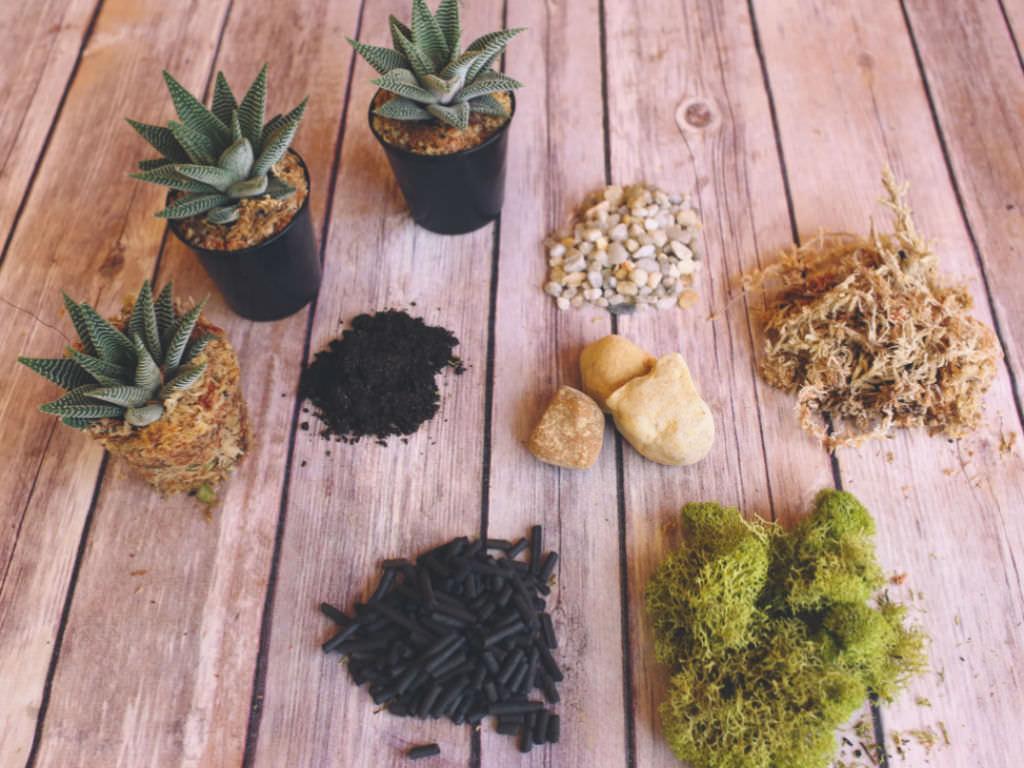 A Beginner S Guide To Making A Succulent Terrarium World