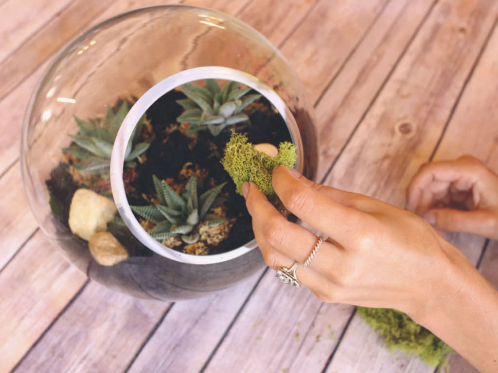 A Beginner S Guide To Making A Succulent Terrarium World