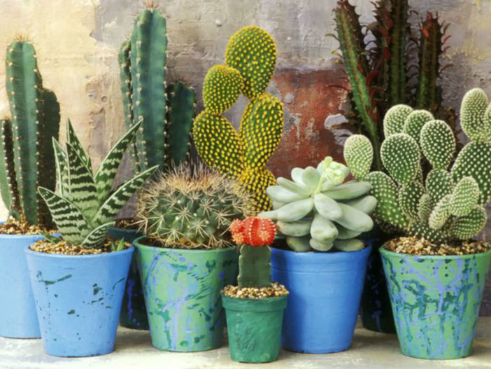 Secrets of Growing Cacti and Succulents