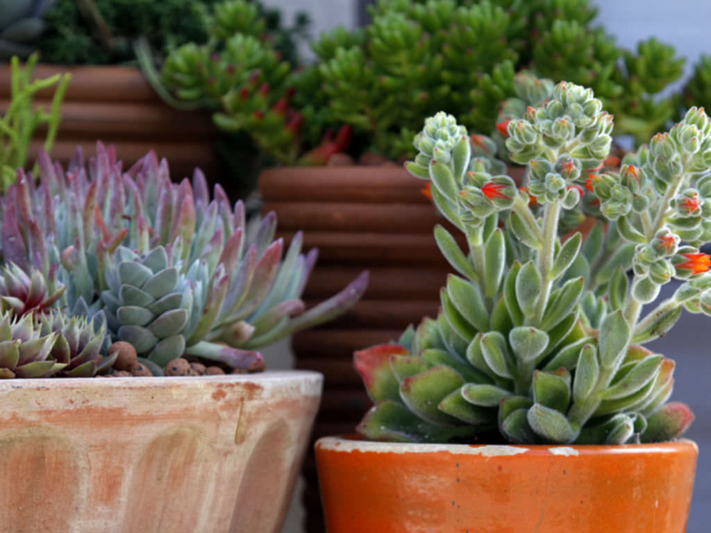 Everything You Need To Know About Succulents World Of