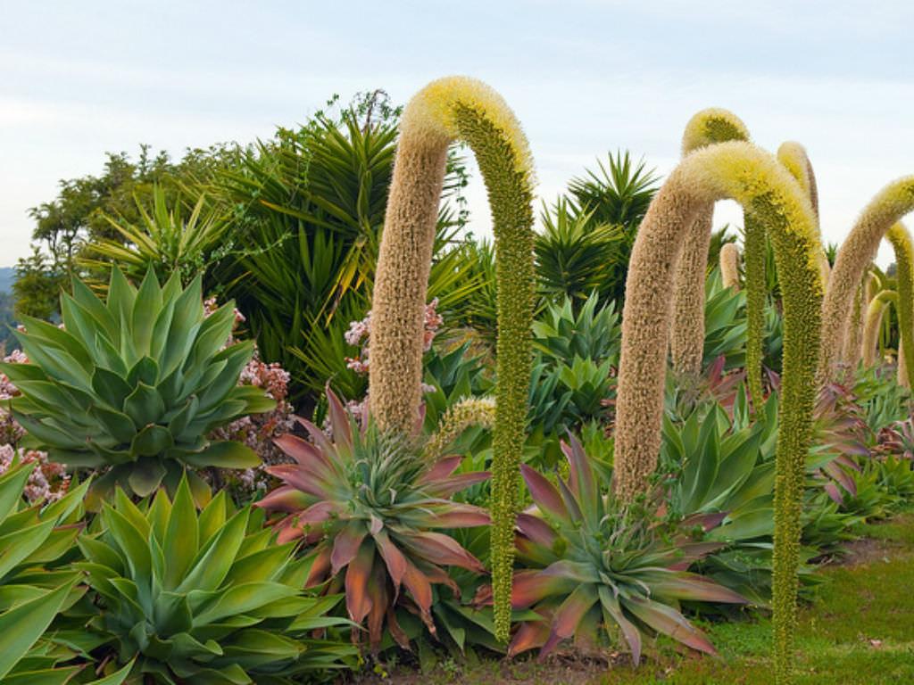 Florida Succulent Landscaping