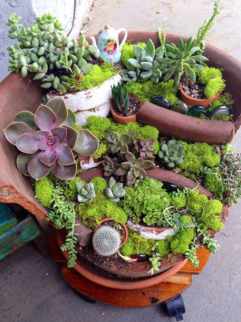 fairy gardens with succulents from broken pots world of. Black Bedroom Furniture Sets. Home Design Ideas