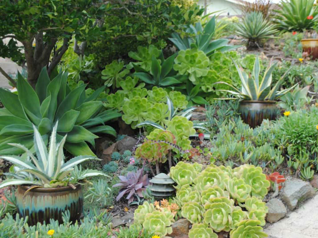 Succulent Garden Photo Via Harmonyinthegarden
