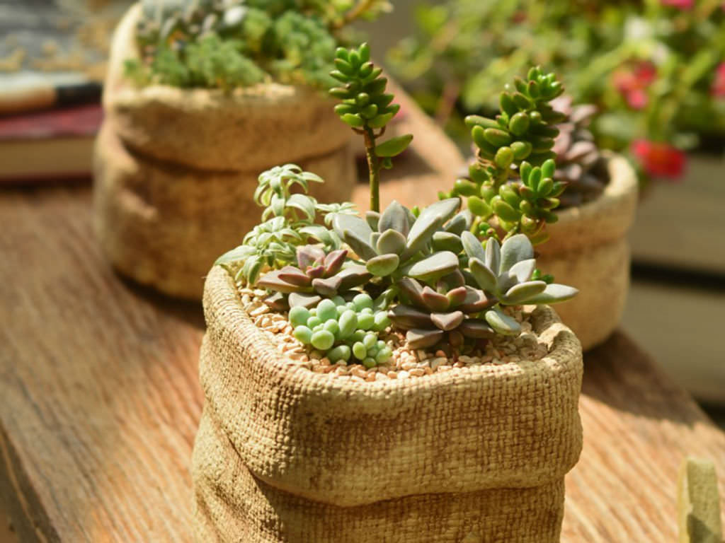 Tips For Growing Succulents Indoors World Of Succulents